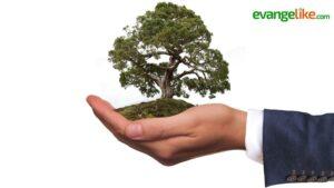¿Cuál es la responsabilidad de la iglesia en el cuidado de la creación?